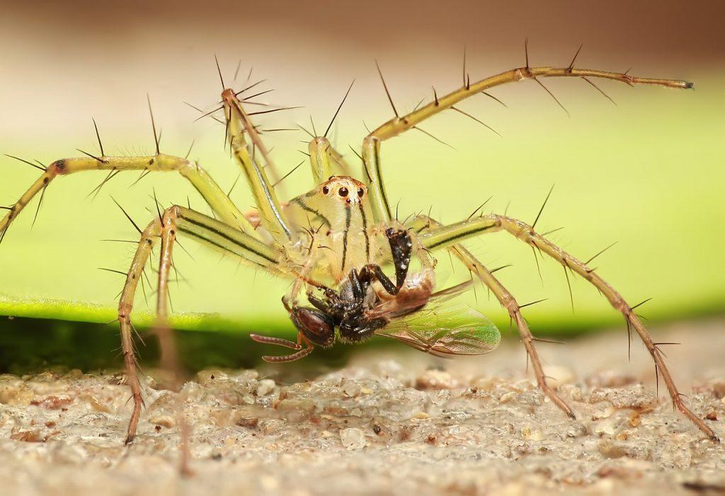 spider-1145105_1280